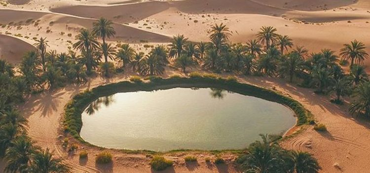 How You Can Explore The Mesmerizing Beauty Of The Desert