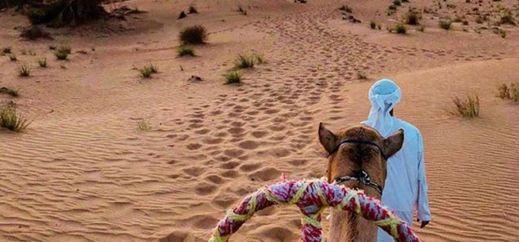Visit the Desert Safari in the Summers