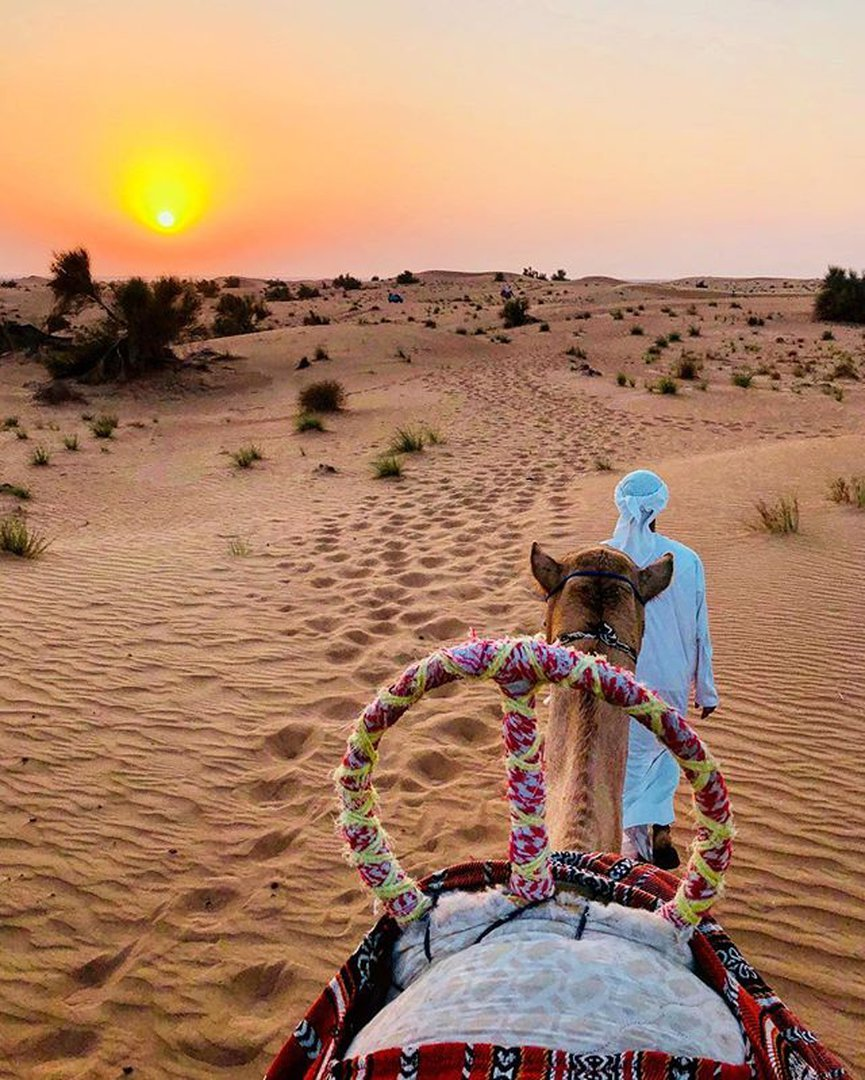 Visit the Desert Safari in the Summers
